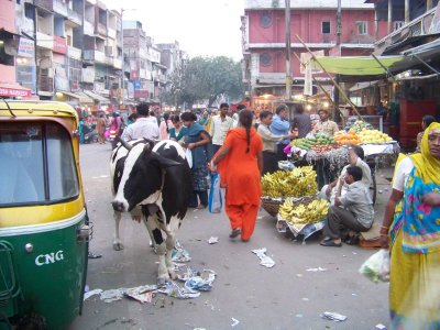 Delhi__68_.jpg