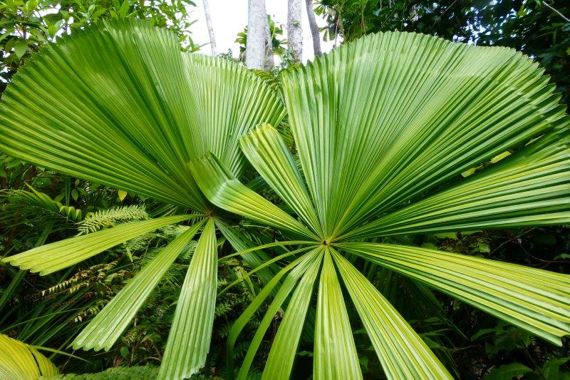 Tropical Qld Oct-Nov'12 241