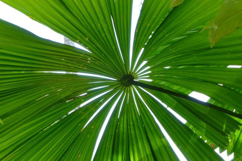 Tropical Qld Oct-Nov'12 259