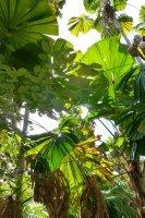 Tropical Qld Oct-Nov'12 258