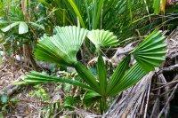Tropical Qld Oct-Nov'12 265