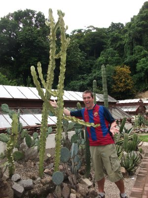 Cactus impersonation