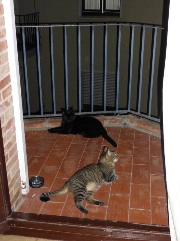 Lazy cats at our hosts house in Figueres
