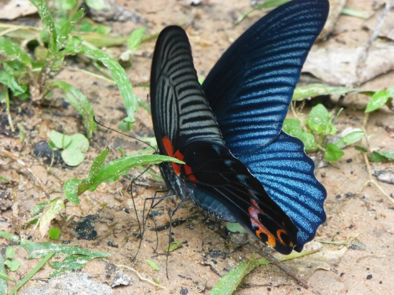 Butterfly at Angkor