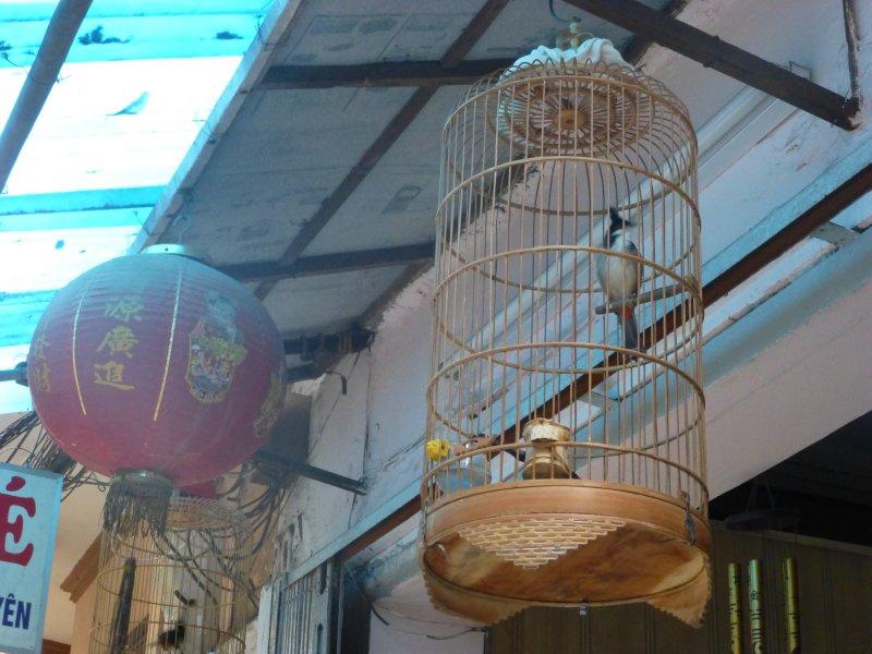 Street Bird in Hanoi