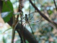Spider at Angkor
