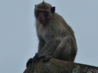 Monkey on Monkey Island