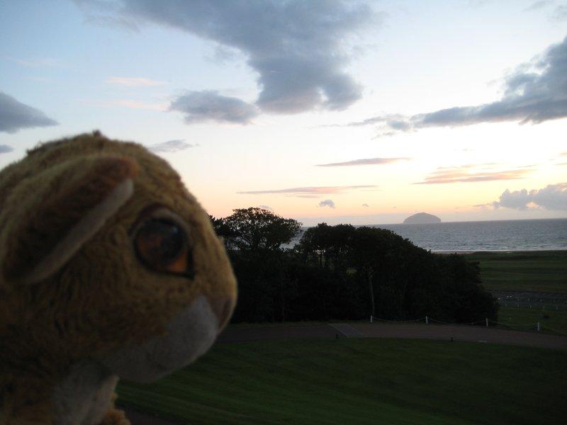 Simba enjoys the sunset