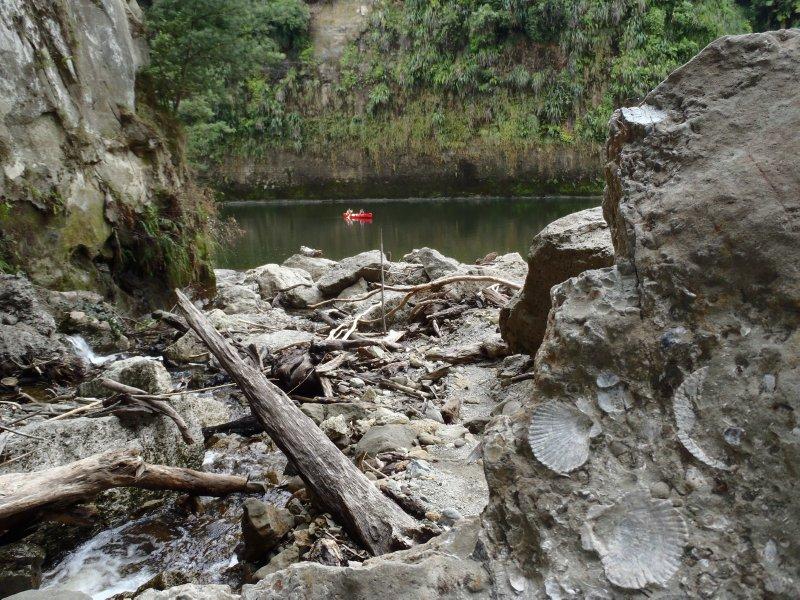 Fossils Along Whanganui Shore