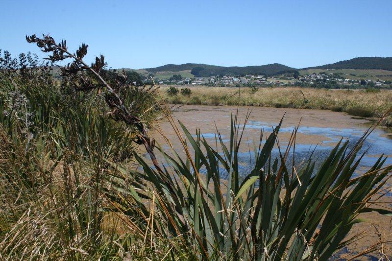 Te Wai Korari Wetland Reserve