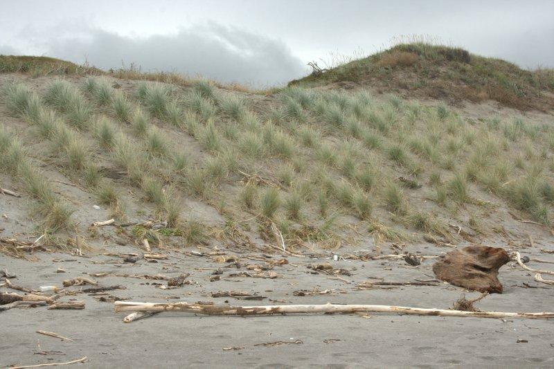 Dune Planting Site at Tirohanga Dunes Conservation Area