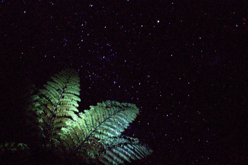 Tree Fern under Night Sky