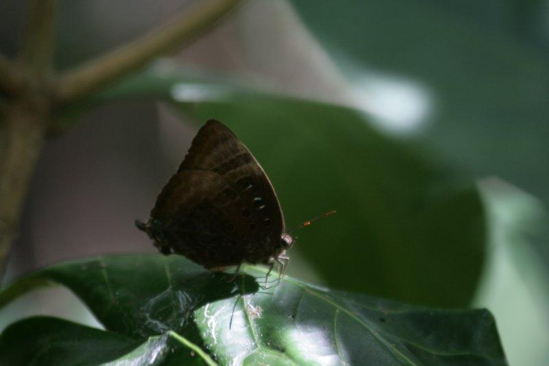 Butterfly along Cherry Tree Trail