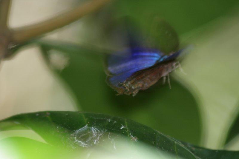 Butterfly in Flight along Cherry Tree Trail