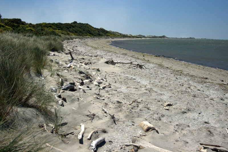 Inner Shore of Farewell Spit
