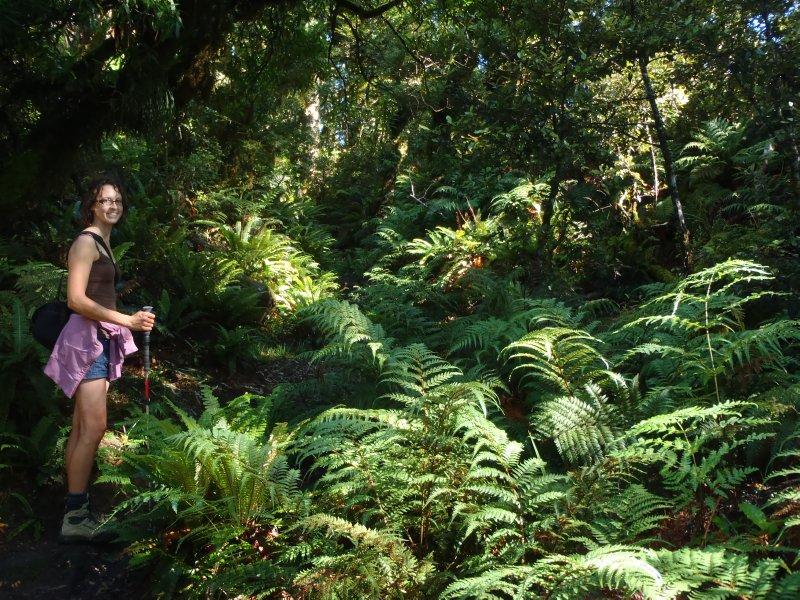 Lake Waikaramoana Track
