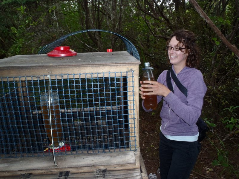 Julie Changing Sugar Water for Hihi and Bellbirds