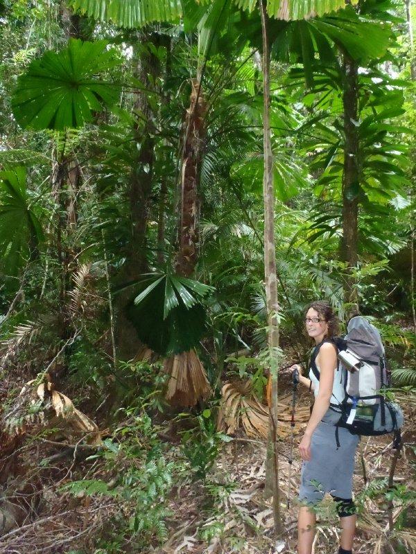 Hiking through Rainforest to Cedar Bay