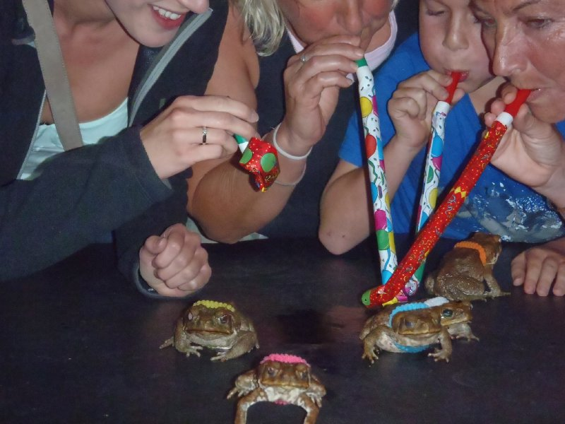 Cane Toad Races at Iron Bar