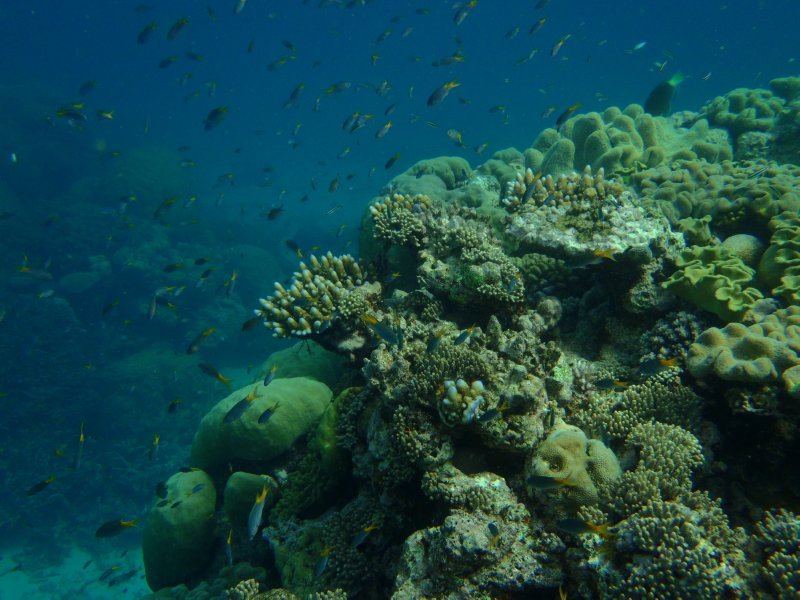 Agincourt Reef Coral