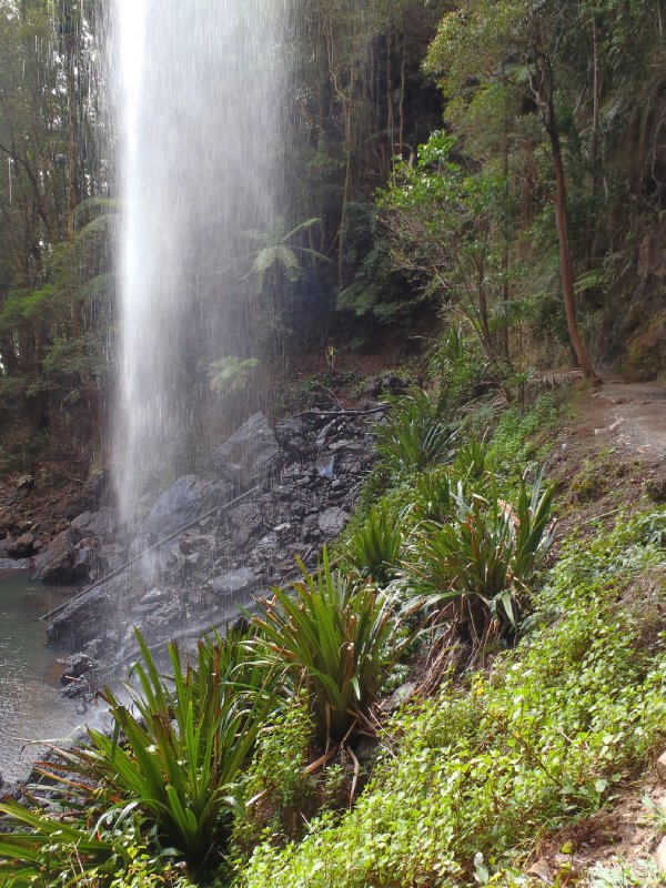 Twin Falls Circuit in Springbrook NP