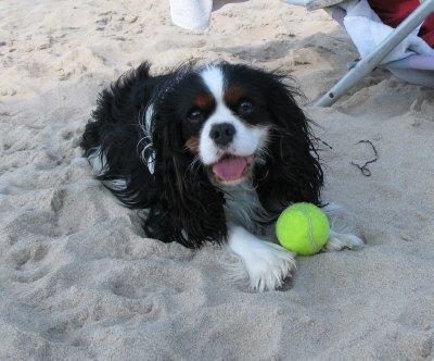 Finn on beach