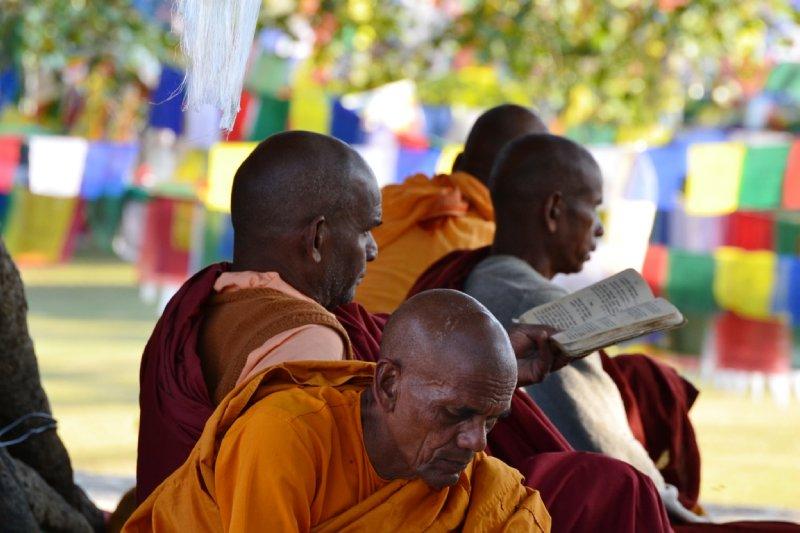 Monks pray under Buddha's sacred tree