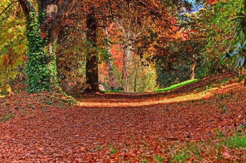 Coloured path