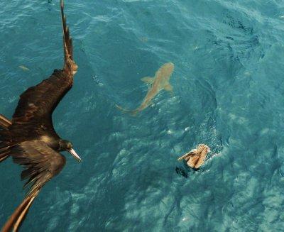Galapagos (01) 205