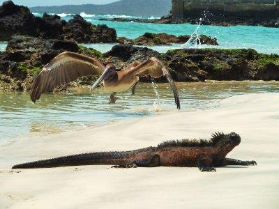 Galapagos (04) 168