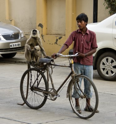 Monkey guard at the Gurgaon condo - She is employed to scare away the more agressive and troublesome macaque monkeys.  Seems to work too! And a pretty good bike rider!!