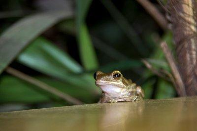 Finding wildlife wherever I go - at dinner (but not for dinner) in Coconut Creek