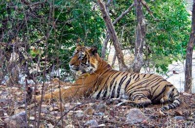 4India2012..04_0079.jpg