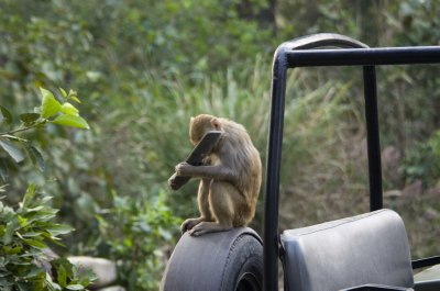 Naughty Macaque