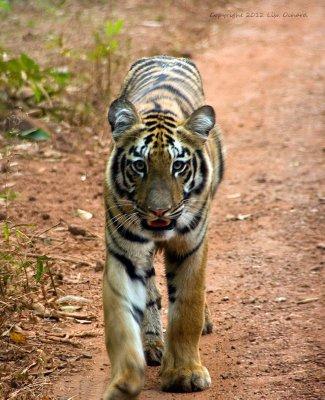 India2012b..0397_Drive8.jpg