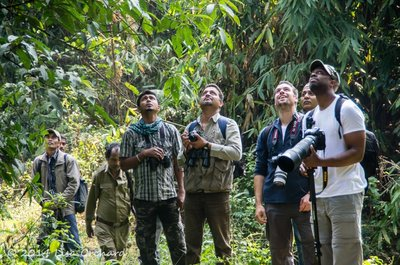 Apes of another kind, watching their arboreal cousins in awe