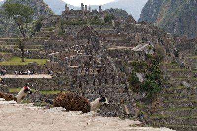 Llama grass control at Machu Picchu