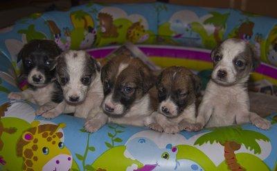 puppies at 4 weeks