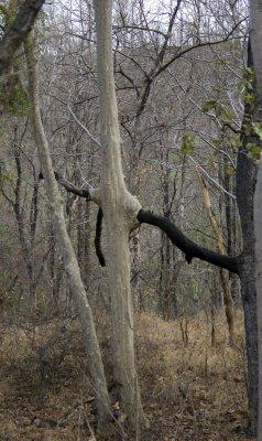 Wacky trees