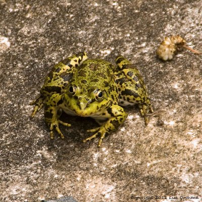 Cool frogs everywhere around the Sacred Well