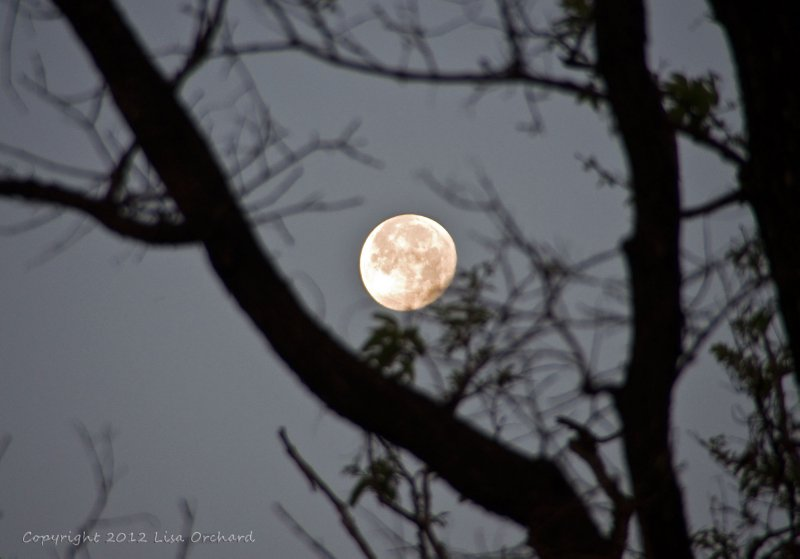 Full moon over Kanha National Park