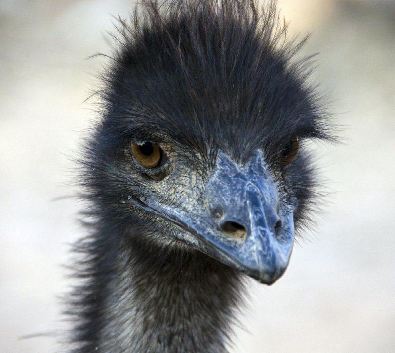 Lake Palace Emu