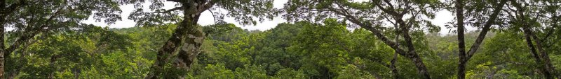 The forest canopy from the tower