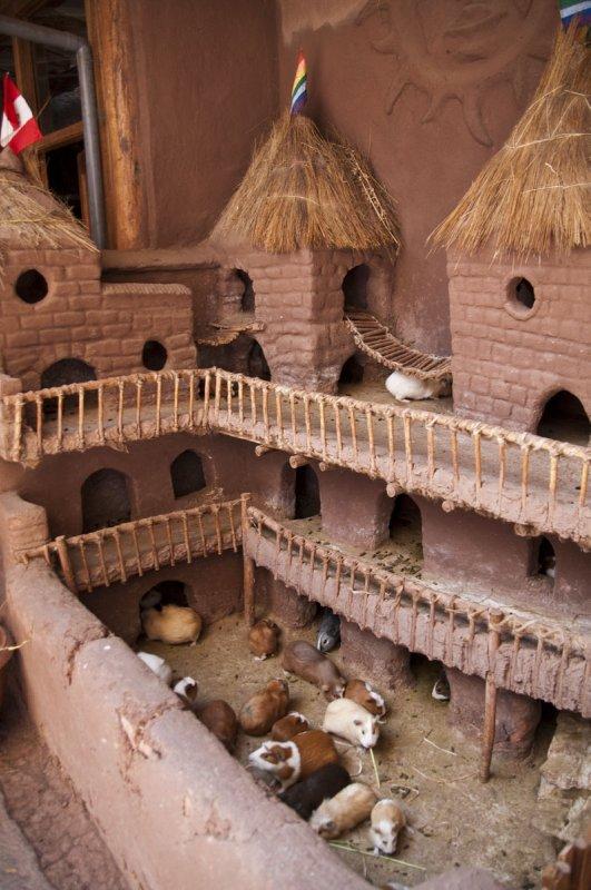 Guinea Pig house, Pisac Market