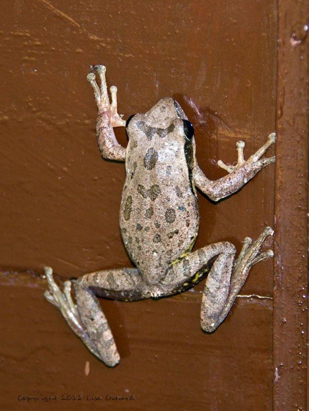 Fun frog on my door