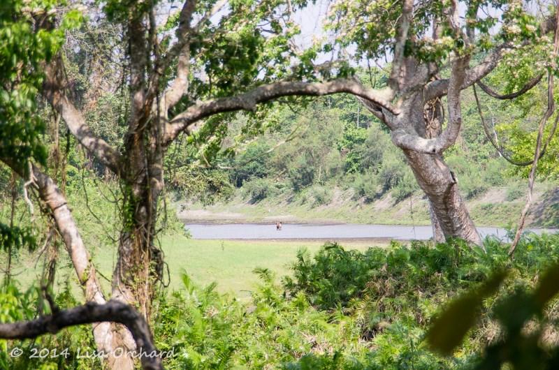 Kaziranga's forests and grasslands