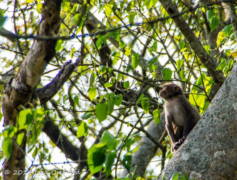 So much rain on this trip in later March, even the macaques were in bliss with a few rays of sunshine!