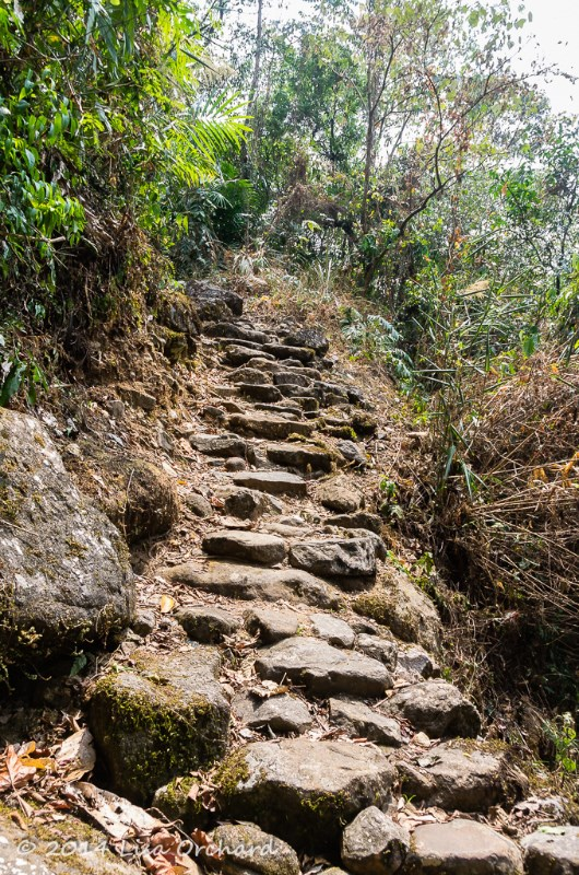 The non-concrete stairs!  Called the King's Way and part of the vast betel-nut trading routes that run through the valley between villages.