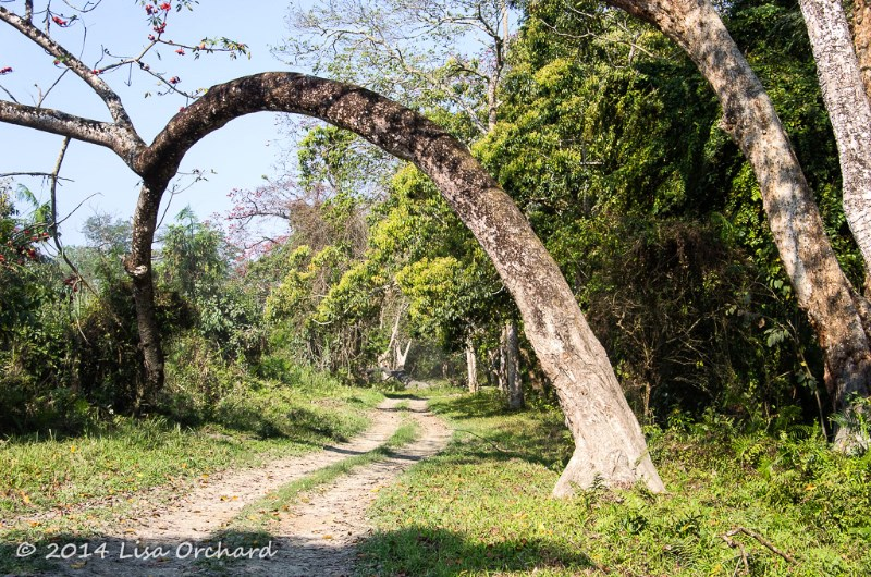 Wonderful forest!