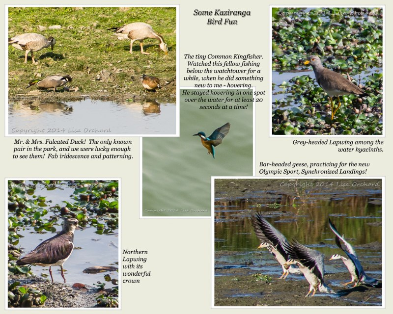 large_Kaziranga2013-4Birds1.jpg